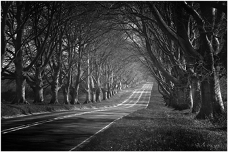 Beech Tree Avenue Kingston Lacy