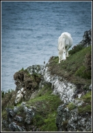 Pony on the Cliff
